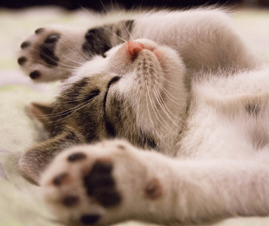 Kitten laying on its back